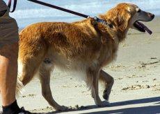 Viajar com seu cão