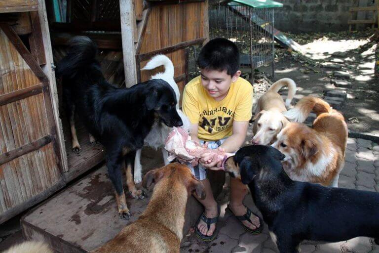 abrigo-de-animais-3