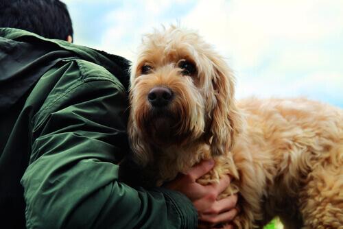 Os segredos da amizade verdadeira entre o cão e o homem