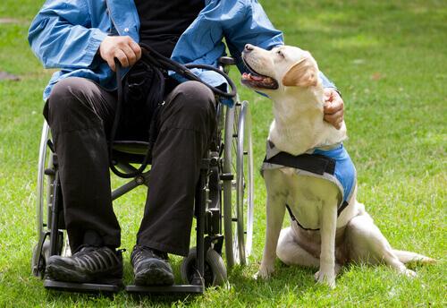 cães que melhoram a vida