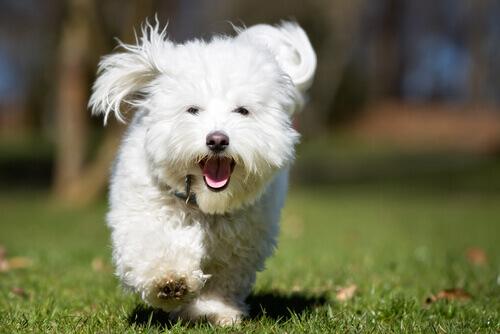 Por que seu cachorro corre quando você lhe dá uma guloseima