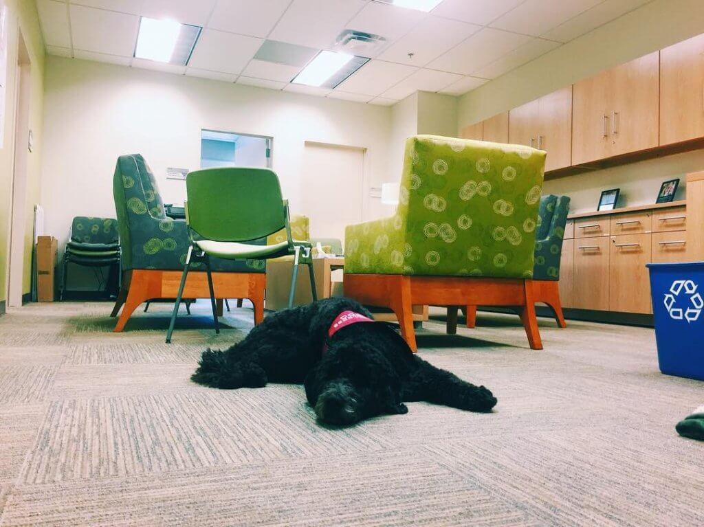 Um cão tornou-se professor da Universidade do Sul da Califórnia