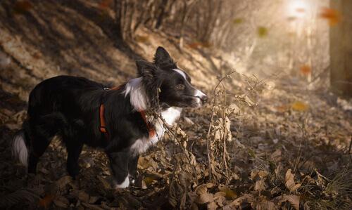 As 10 raças de cachorros que mais gostam de esporte