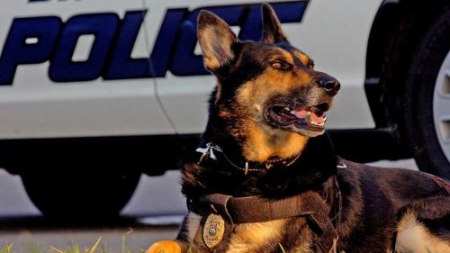 danko-o-cao-policial-aposentado