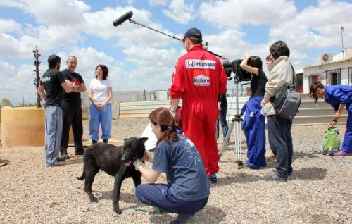 Um documentário impressionante contra o abandono de animais
