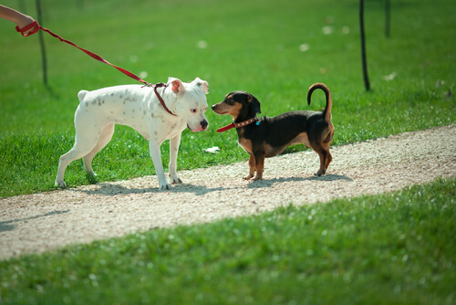 Por que os cães farejam entre si?