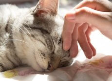 dormir com seu gato