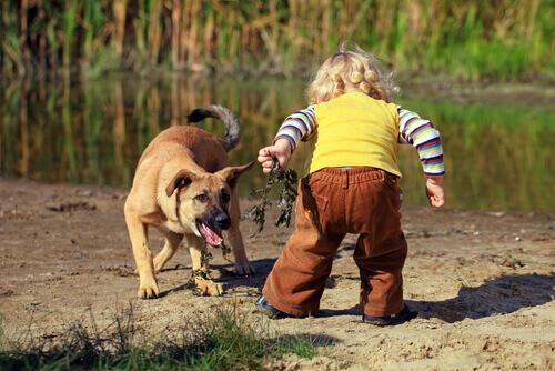 O que fazer se meu filho tem medo de cachorros