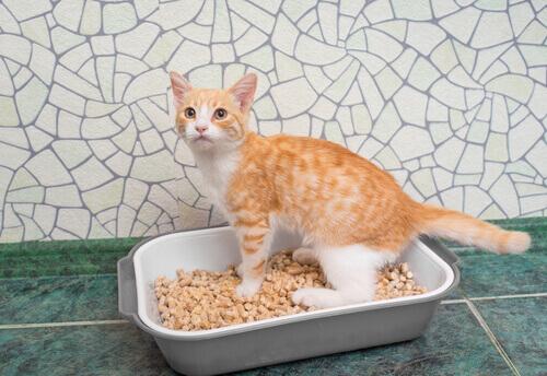 gato-e-caixa-de-areia