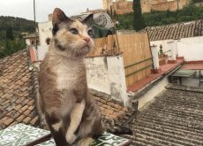 gatos-de-alambra
