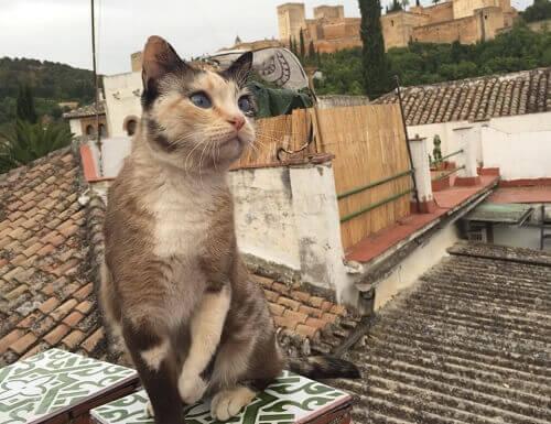 Os gatos de Alambra