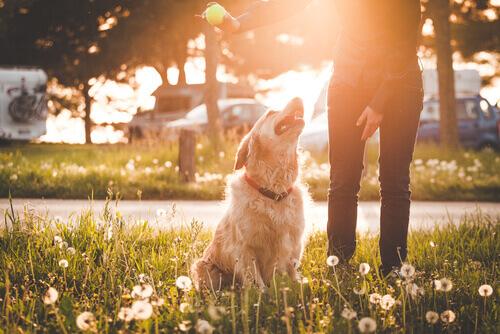 Prós e contras de levar o seu cão ao parque