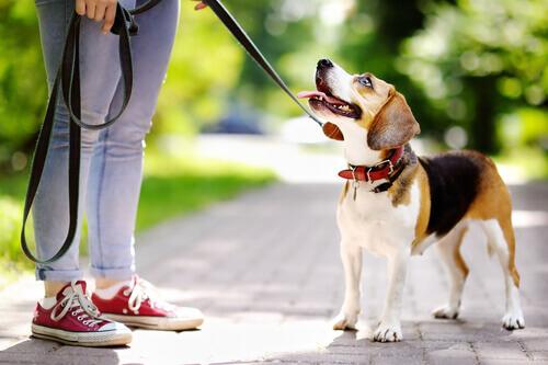 Como posso motivar o meu cachorro a aprender?