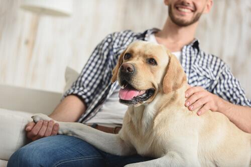 Você sabia que os cães reconhecem o tom de voz?