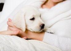amantes dos cães