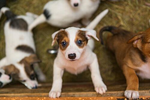 Qual a diferença entre uma sociedade protetora e um abrigo de animais?