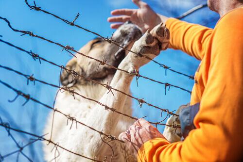 salvar um cão