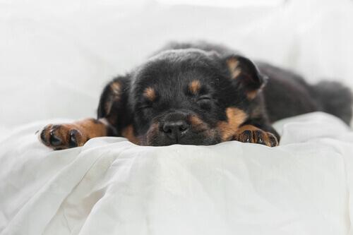 Por que o descanso e dormir bem são importantes para os animais de estimação?