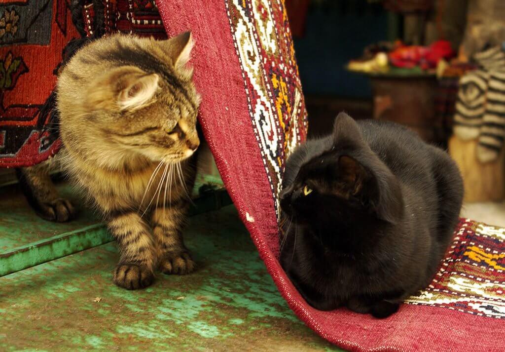 Conheça a mesquita que oferece um lar para gatos abandonados