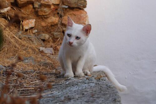 O que os gatos representam em diferentes culturas?