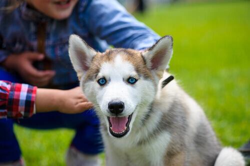 Seu cão não confia em você? Siga estas dicas!
