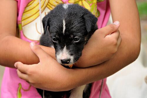 Seu filho pode aprender a cuidar de um animal de estimação através de brincadeiras