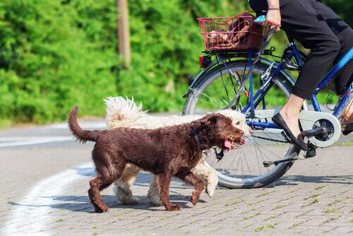Dicas para andar de bicicleta com o seu cão