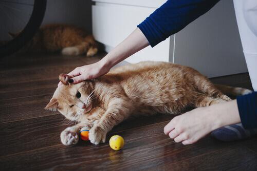 Você quer ser voluntário para ajudar os animais?