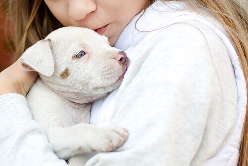 Os animais como terapia para o Transtorno do Espectro Autista