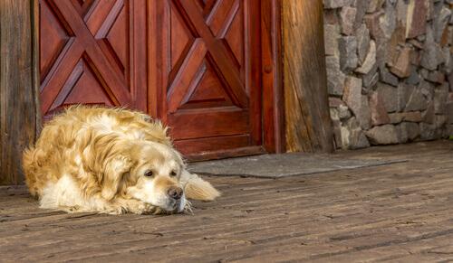 De que forma as mudanças afetam os cães?