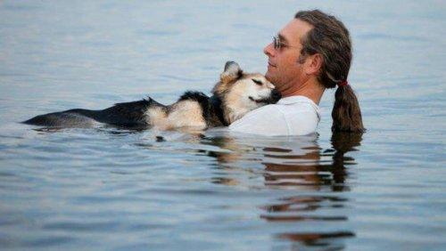 Conheça os animais de estimação mais famosos do Facebook