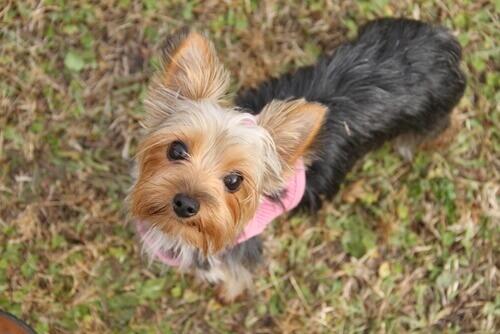 Cães pequenos: 6 coisas que você deve saber