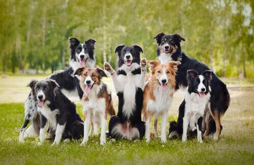 21 coisas que você não sabia sobre cães e que lhe deixarão sem palavras. Parte 2