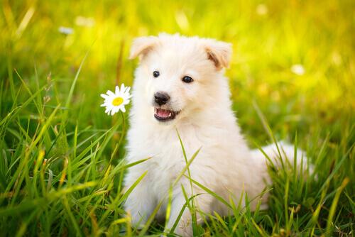 Frases Sobre Cães Que Encantarão Você Meus Animais