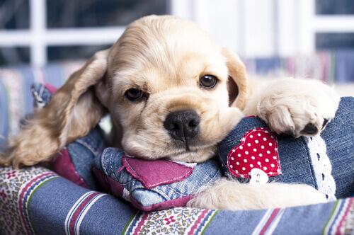 Os benefícios do mel para o seu cachorro