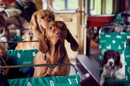 Londres inaugura um ônibus para cachorros