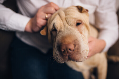 Saiba o porquê dos nossos animais nos conhecerem melhor do que ninguém