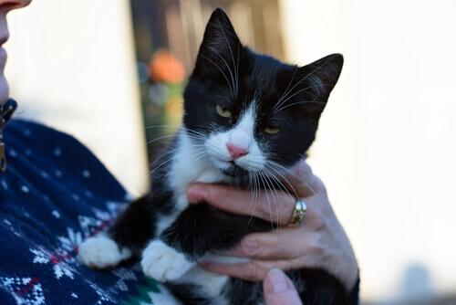 Um estudo sobre como os gatos se comunicam com os próprios donos