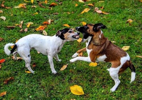 Como você pode impedir uma briga entre cães?