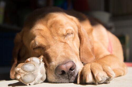 Seu cão adota posições diferentes para dormir de acordo com a situação