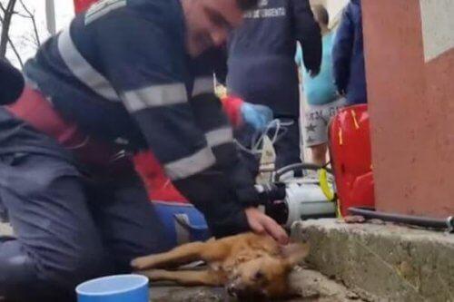 Um bombeiro consegue salvar a vida de um cachorro através da respiração boca a boca