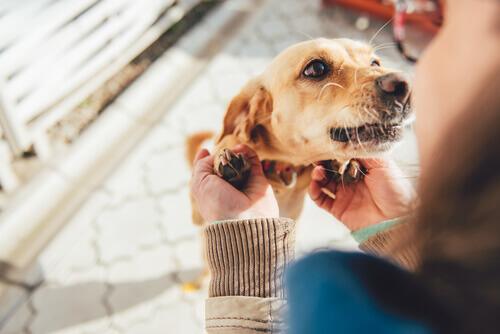 10 coisas que seu cão quer que você saiba