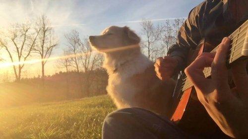 cão com dono no sol