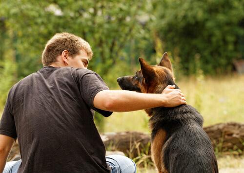 Os melhores presentes para quem ama cães