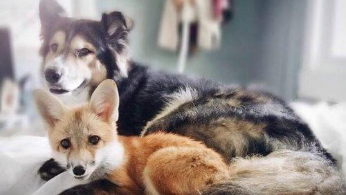 As amizades mais diferentes e belas que existem