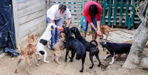 Prefeitura colombiana manda desalojar uma fundação com animais resgatados