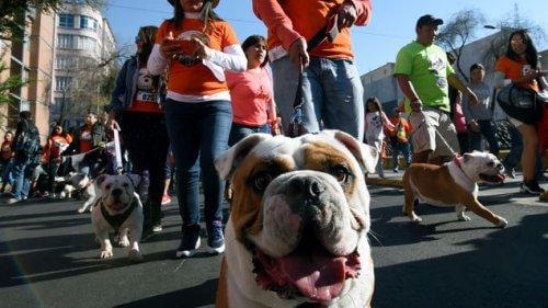 Perroton: a corrida solidária mais canina que já aconteceu