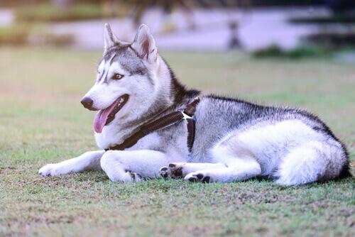 8 coisas que o seu cão pode te ensinar para viver em paz