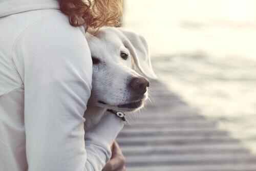 Seu cão não gosta de convidados? Siga estas dicas!