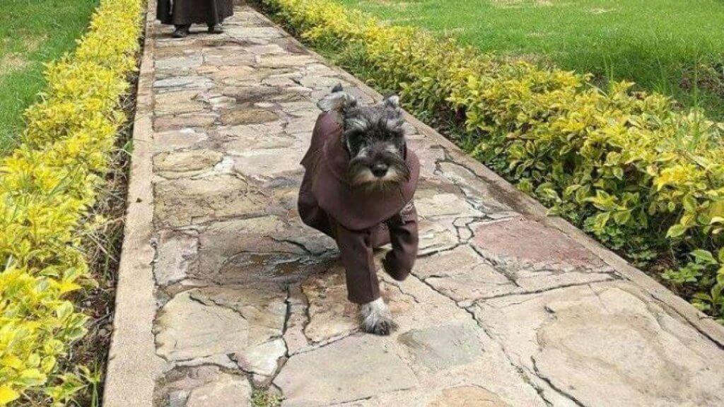 Conheça a história de um cão monge